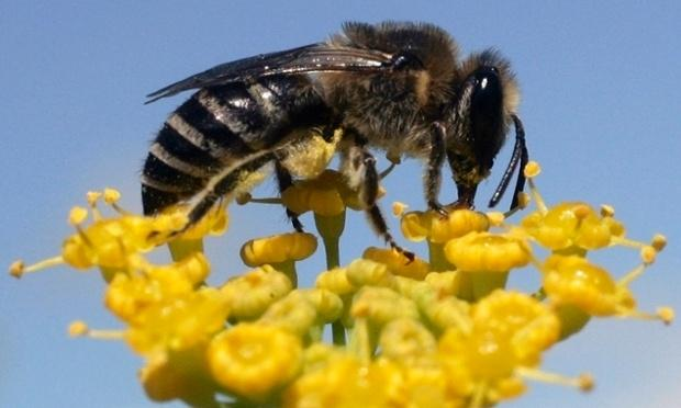 Queen's Research Suggests UK Honey Bee Parasite Linked to Climate Change