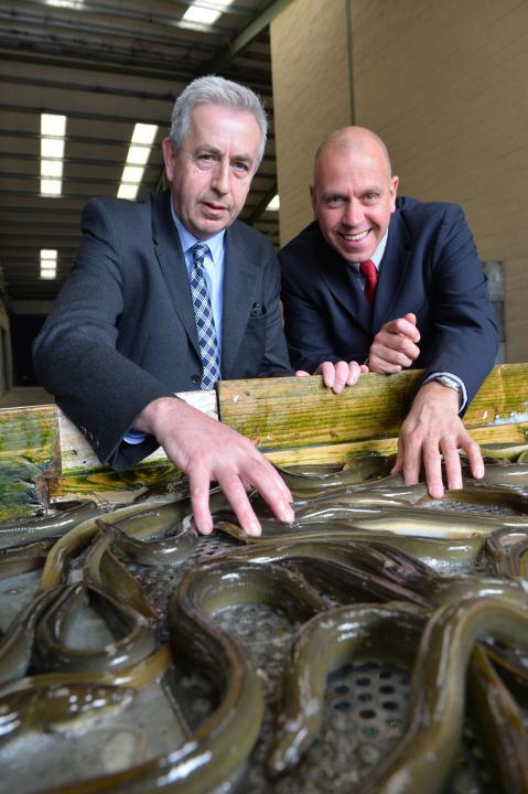 Lough Neagh Fishermen's Co-operative Scale up Eel Exports